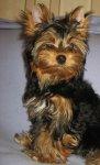 Замечательный щенок