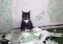 Настенное покрытие для владельцев домашних животных