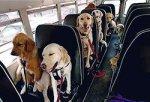 На автобусе вместе с собакой