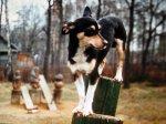 Гомеопатия для собак
