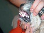 Как снять зубной камень у собаки