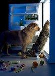 собака, кошка и холодильник