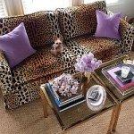йоркширский терьер в гостиной на леопардовом диване