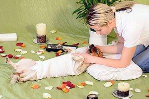 Как правильно делать массаж собаке.